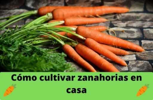 Como Preparar Una Cama Para Zanahorias En Primavera Farmer Tomar zumo de zanahoria puede ser una gran idea. como preparar una cama para zanahorias