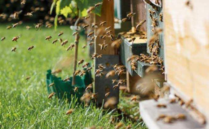 Colmena de 16 marcos – métodos básicos de apicultura