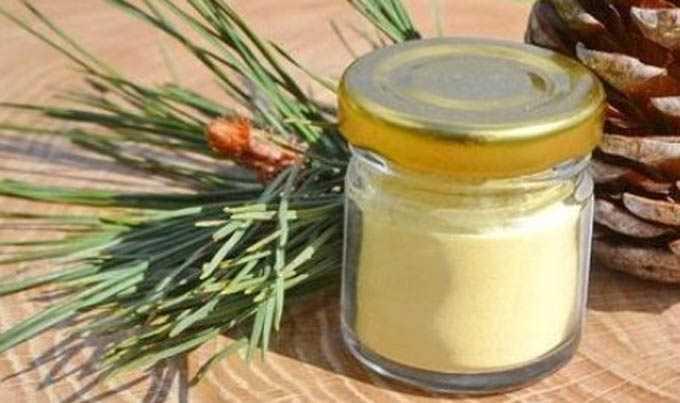 Cómo se usa el polen de pino con miel en la medicina popular.