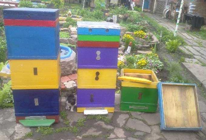 Elegir un color de pintura para una colmena de abejas