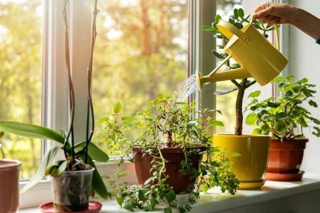 10 reglas principales para regar plantas de interior - cuidado