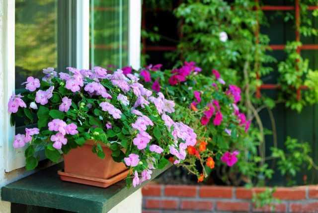 5 errores al cuidar el cuidado del bálsamo en interiores