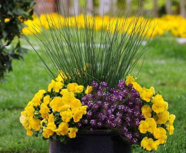 6 cereales sin pretensiones para composiciones de contenedores: hermosas plantas de interior