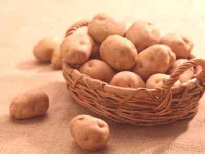 Caractéristiques des pommes de terre Aurora