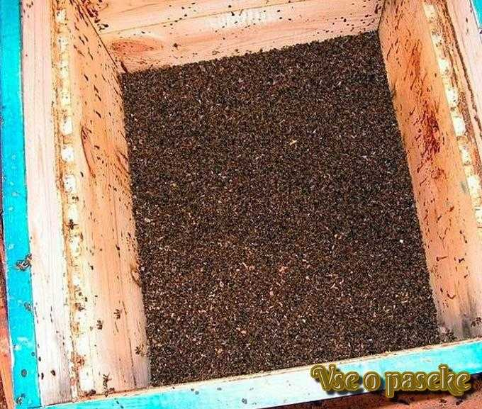 Causes de la diarrhée chez les abeilles au printemps et traitement approprié