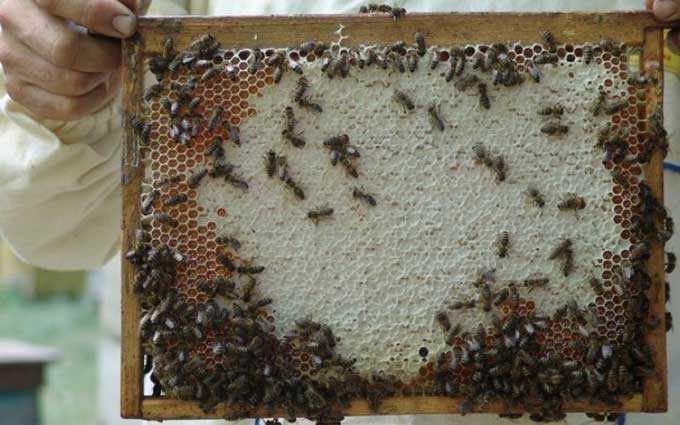 Productivité du rucher – combien de miel la ruche donne-t-elle