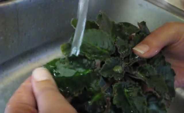 Comment bien laver les feuilles de violette ?