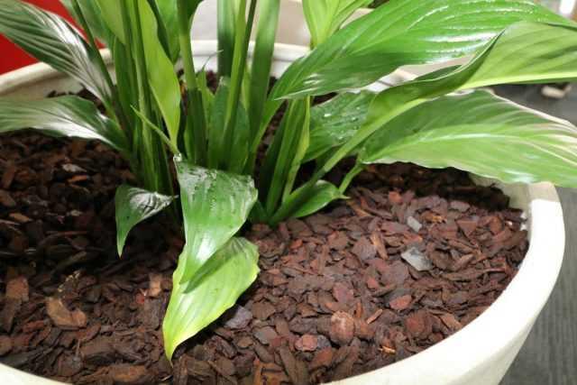Paillis pour plantes d'intérieur – à la fois utile et beau-Soins