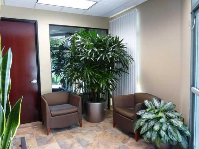 Plantes d'intérieur ornementales dans le couloir et les cages d'escalier - soins