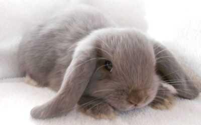 Conigli in crescita a casa per i principianti