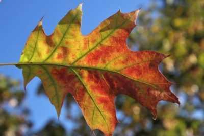 Le foglie diventano gialle e secche: cause, trattamento