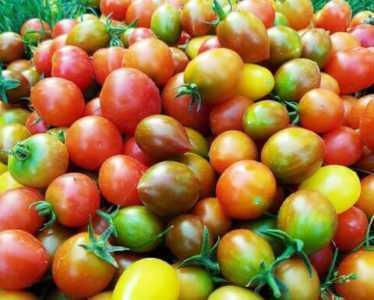 Le migliori varietà di peperoni per insalata