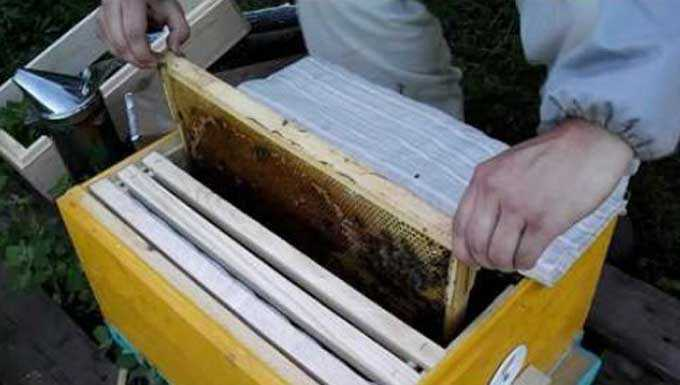 Contenuto di api batch
