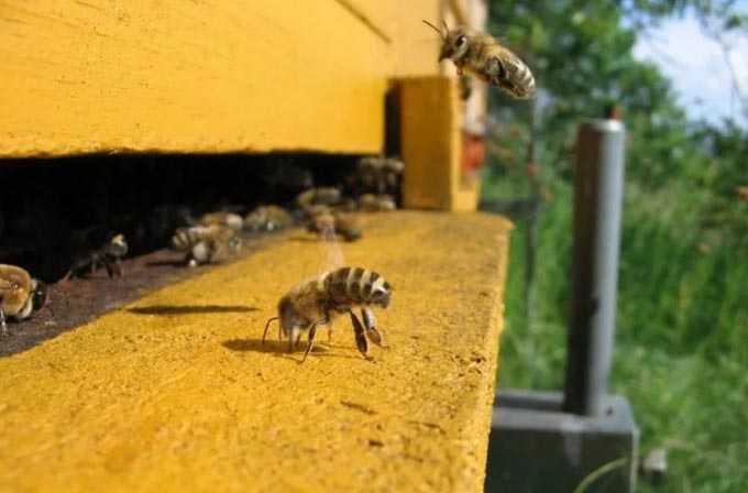 Cosa fare in estate in apiario