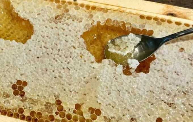 Informazioni sul trattamento del miele e sulla sua importanza nella medicina tradizionale