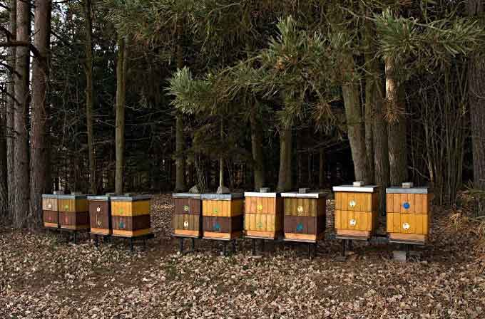 Posizionamento di un apiario in un'area forestale