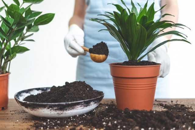 Come trapiantare una pianta d'appartamento? cura