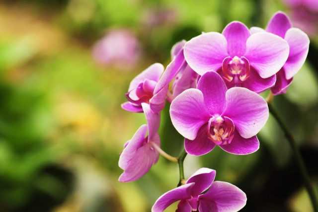 Quale dovrebbe essere il terreno per le orchidee? cura