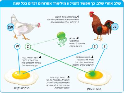 תהליך ביצי עוף