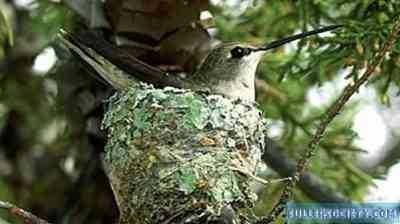 ציפורי הנצים