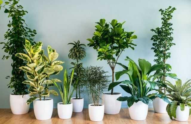 10 הצמחים הפנימיים הפופולריים ביותר
