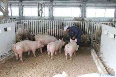 事業計画のミニ豚農場の組織