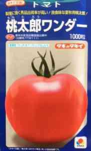 トマト品種ドールF1の特徴