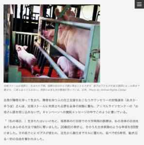豚が歩く日数と交配の有効性を確認する方法