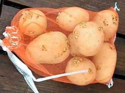 春と秋のジャガイモの施肥ルール