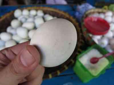 家でガチョウの卵を孵化させる方法