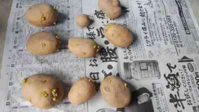 2018年にジャガイモを植える日付は何ですか