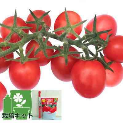 イチゴの木のトマトの特徴