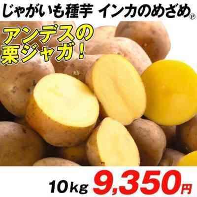 ジャガイモ品種アラディンの特徴