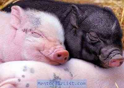 子豚の去勢に関する規則