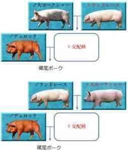 豚のくずの品種