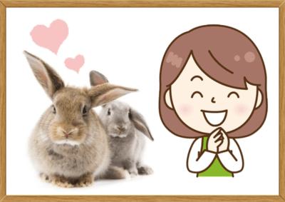 ウサギの妊娠期間は何週間ですか?