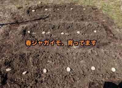 目でジャガイモを植えることの利点