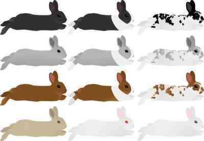うさぎの様々な肉種