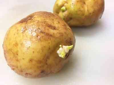ジャガイモの人体への影響