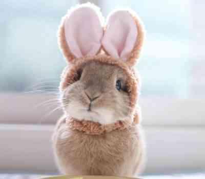 ドワーフウサギの寿命