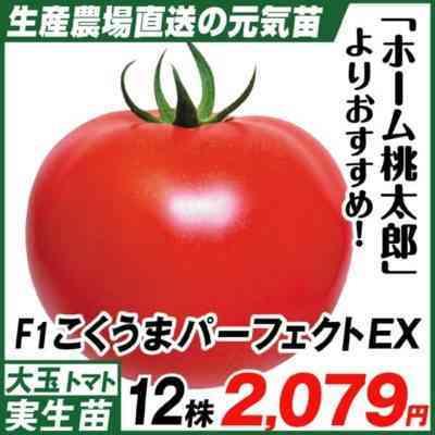 トマトちびの説明