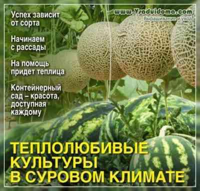 私たちはレニングラード地域のためにコショウの品種を選びます