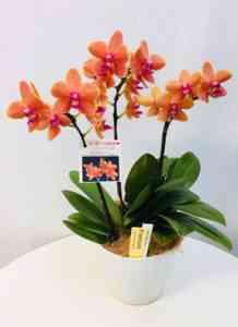 特徴的なオレンジの蘭