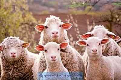 ヒサール羊と羊