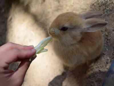 ウサギに穀物を与える特徴