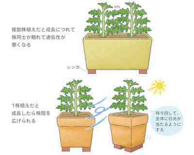トマトを植えるための温度