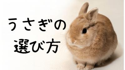 ウサギの名前の選び方