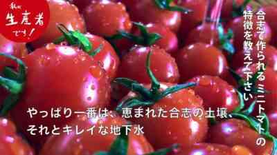 クラッシトマトの特徴