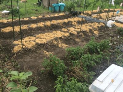 2019年にジャガイモを植えるためのルール