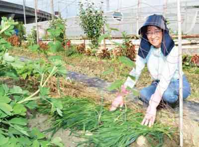 カタツムリにコショウの苗を植えて育てる